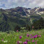 Kefir oorsprong in Kaukasus